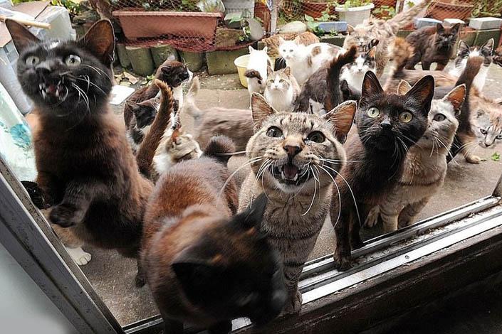 Свєткіни кішки