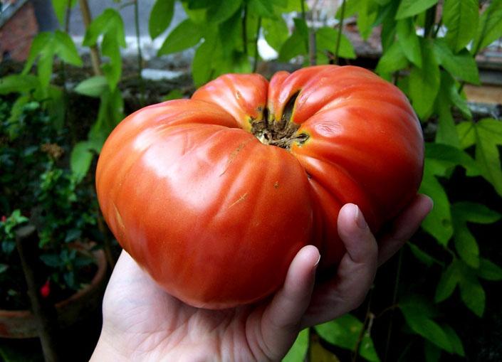 Таємниця Бога, таємниця людини. «А як же помідори?» – cпитаєте ви